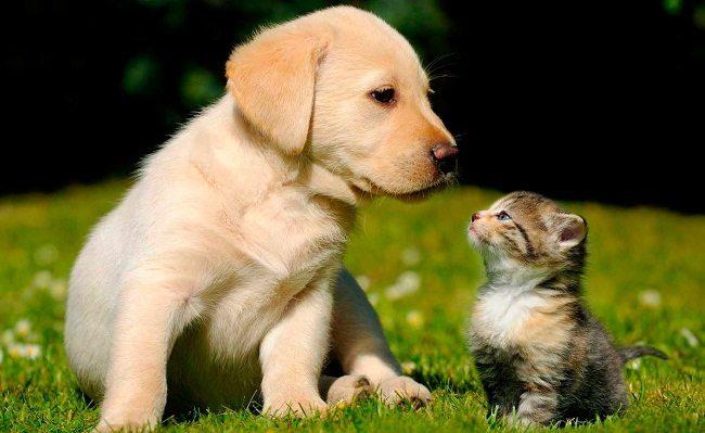 Vacunación para Perros y Gatos