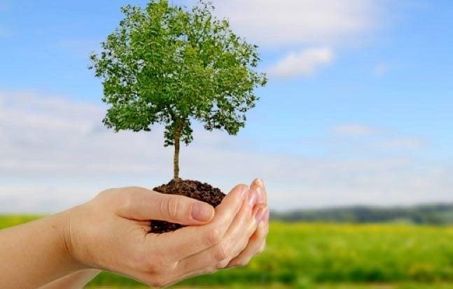 Resultado de imagen de plantar un arbol