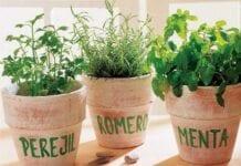 Plantas-Aromaticas-Sembrar-Casa