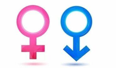 Órganos genitales de las mujeresy de los hombres