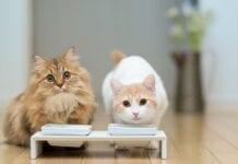 Alimentos-Toxicos-Gatos