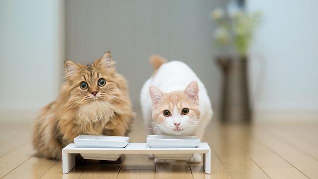 Alimento tóxico para gatos