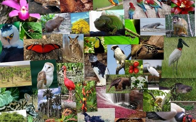 Resultado de imagen de Diversidad de especies voladoras