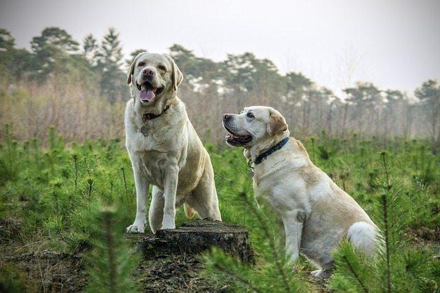 Peso ideal en perros