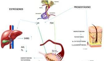 Anticonceptivos orales combinados