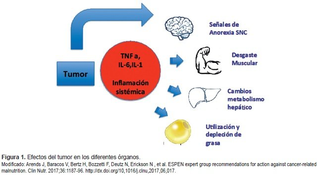 Efectos del tumor en los diferentes órganos