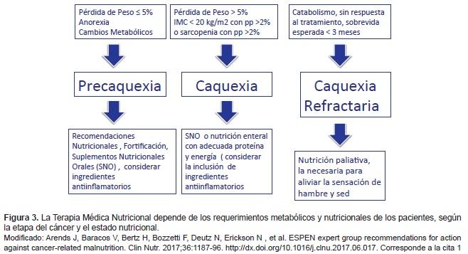 La Terapia Médica Nutricional