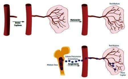 Angiogenia