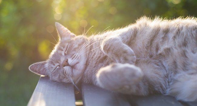 cáncer de piel en gatos