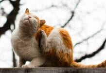 Control-Pulgas-Gatos
