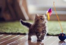 Cosas-No-Deben-Faltar-Gato