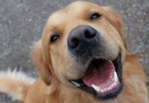 Enfermedades-Dentales-Perros