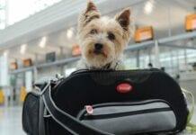 Viajar-Avion-Mascotas