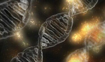 Endocrinología Molecular