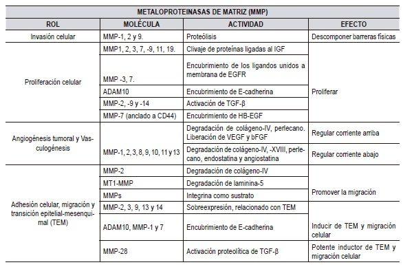 Las MMPs durante la progresión del cáncer