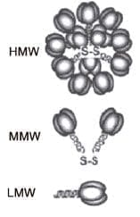 Diferentes tipos de adiponectina