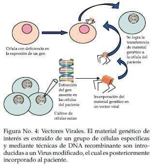 Terapia génica in vivo