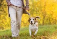 Consejos-Pasear-Perro-Mascotas