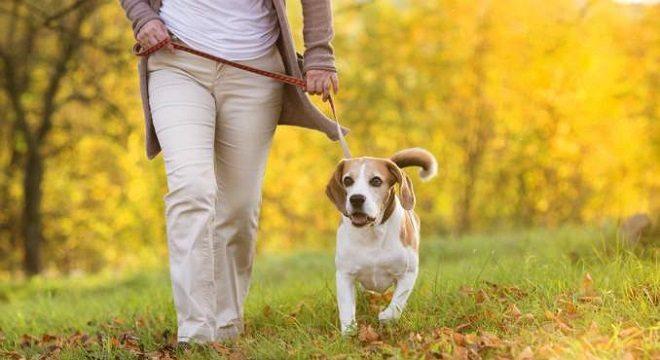 Consejos para pasear perros
