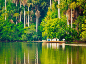 Parque Nacional de Manu (lugares para visitar en perú)