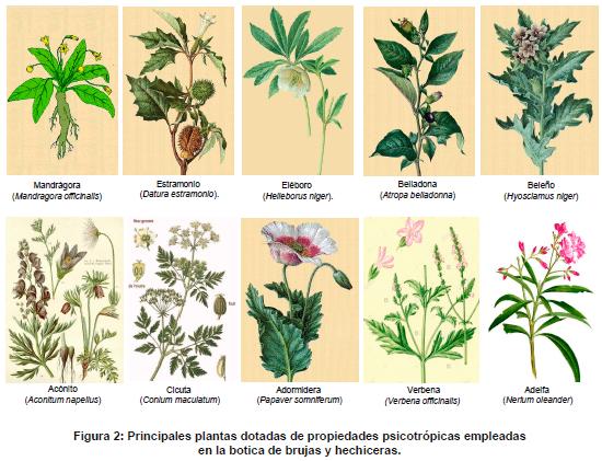 Plantas dotadas de propiedades psicotrópicas