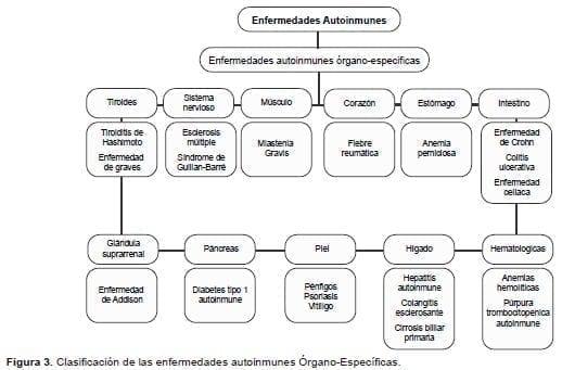 Clasificación de las enfermedades autoinmunes Órgano-Específicas