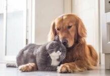 Enfermedades-Comunes-Mascotas-Adultas