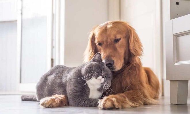 Enfermedades en Mascotas Adultas