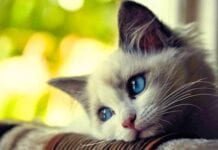 Como-Saber-Gato-Deprimido
