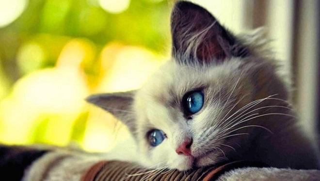 gato está deprimido