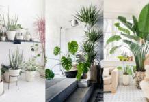 Decorar-Casa-Plantas