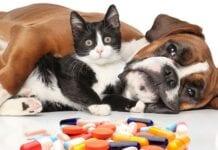 Medicamentos-Prohibidos-Mascotas