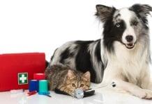 Primeros-Auxilios-Mascotas