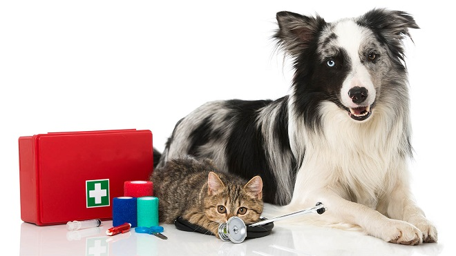 Primeros auxilios mascotas