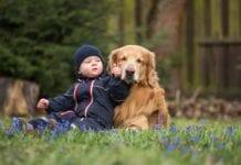 Razas-Perros-Para-Niños