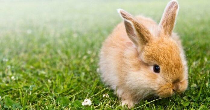 Cuidados básicos del conejo