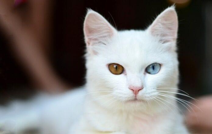 mascotas albinas