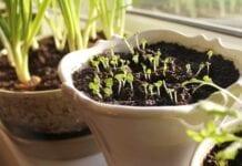 plantas para sembrar