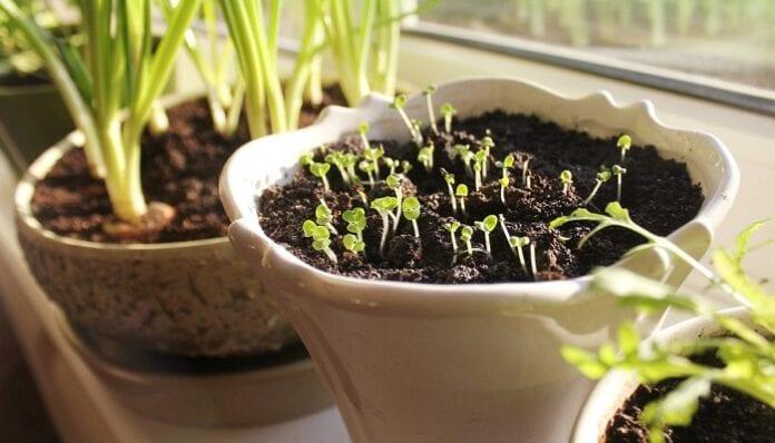 Plantas para sembrar en casa