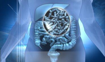 probióticos bb-12