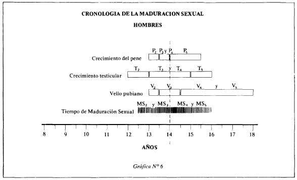 Cronología de la maduración sexual en el hombre