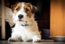 Cómo Detectar Estreñimiento en Gatos y Perros