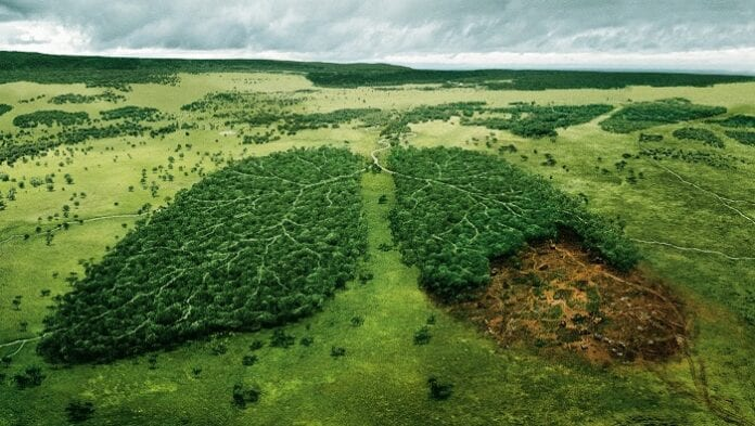 Resultado de imagen de deforestación