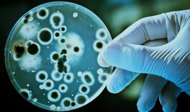 Carcinoma Oral Trasplantable para Bioensayos, Objetivos
