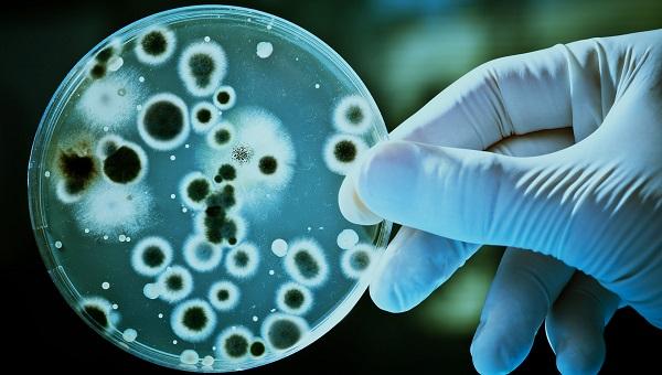 Carcinoma Oral Transplante para Bioensayos