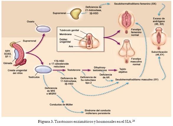 Trastornos enzimáticos y hormonales - Síndrome de Insensibilidad