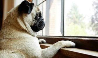 Reduce el Estrés de tu Perro