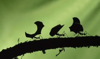 Qué Significa Soñar con Muchas Hormigas