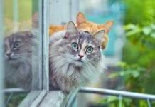 Cómo Introducir un Nuevo Gato en el Hogar