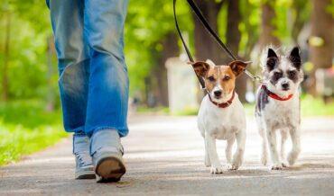 Consejos de Adiestramiento Básico para Perros